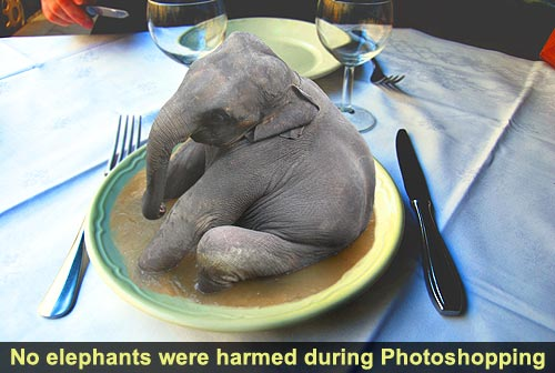 How To Eat An Entire Elephant By Yourself  500 Dollar -2182